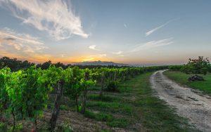 Bike Tours in Tuscany